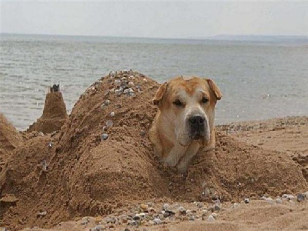 Вот где собака зарыта! — причина, истина