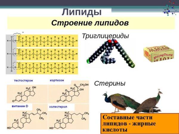 какие органические вещества входят в состав клетки