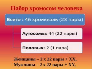 46 хромосом